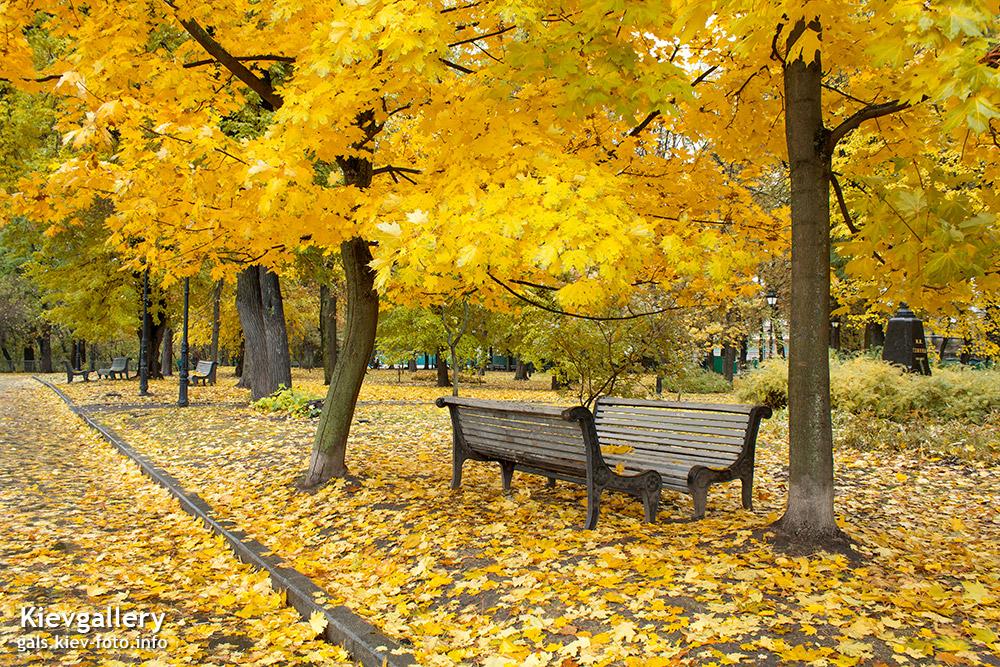 Желтые деревья в городском саду - Yellow trees in the city park