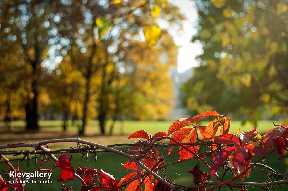 Осенние краски. Autumn colors
