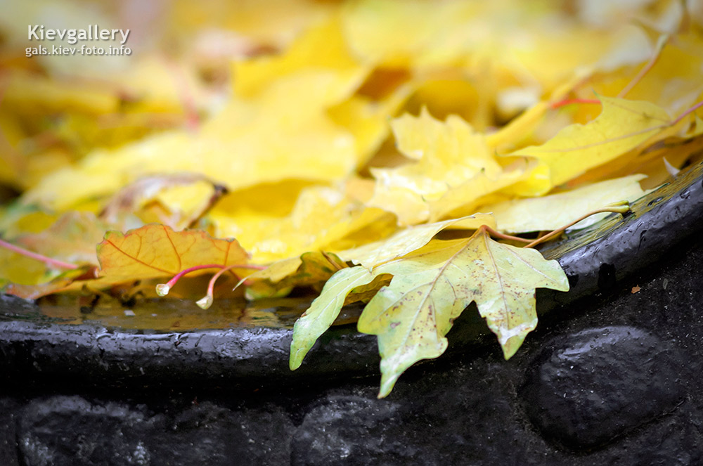 Осенний Киев. Фотографии осеннего Киева. Желтые листья