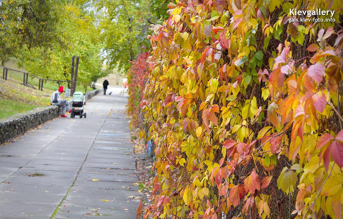 Осень на озере Вербное на Оболони