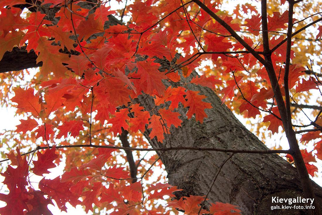 Осенний Соломенский парк