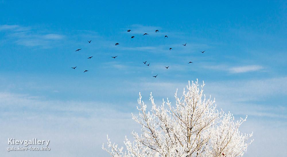 Фото зимнего Киева