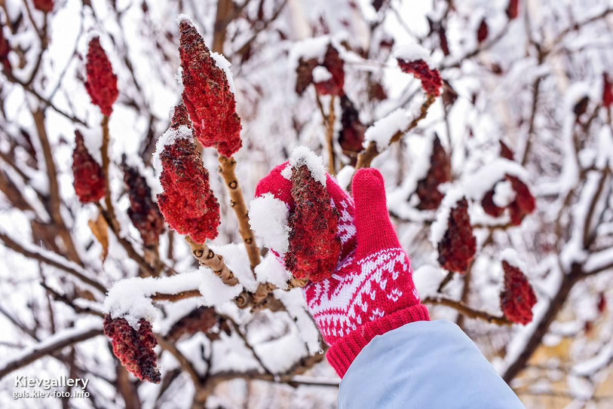 Снова зима в Киеве