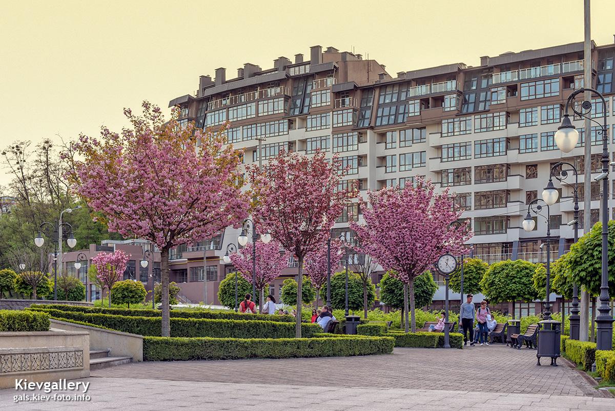Фотографии Киева. Топ-10 лучших фото Киева. Сакура в парке Г. Алиева
