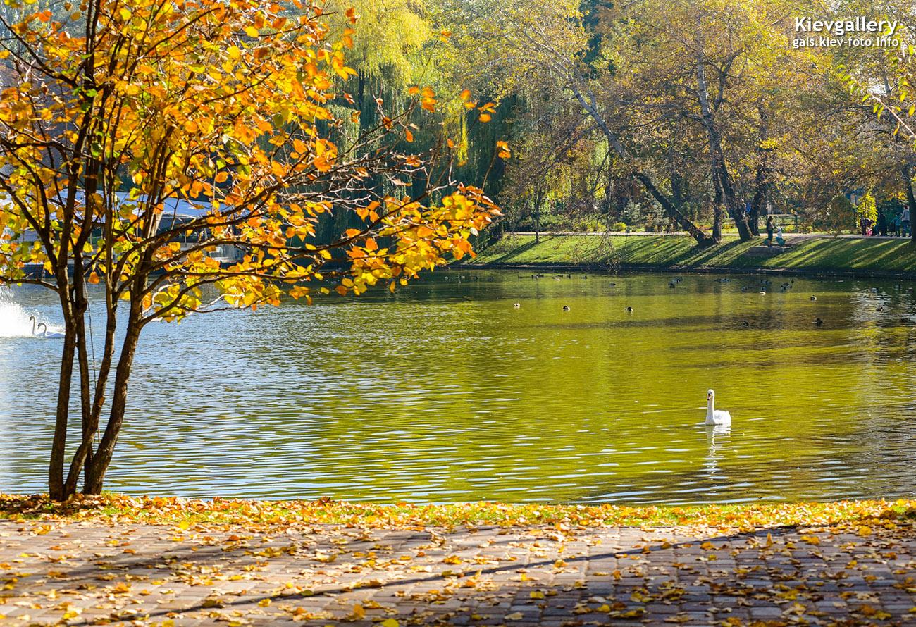 """Лебеди возле ресторана """"Прага"""""""