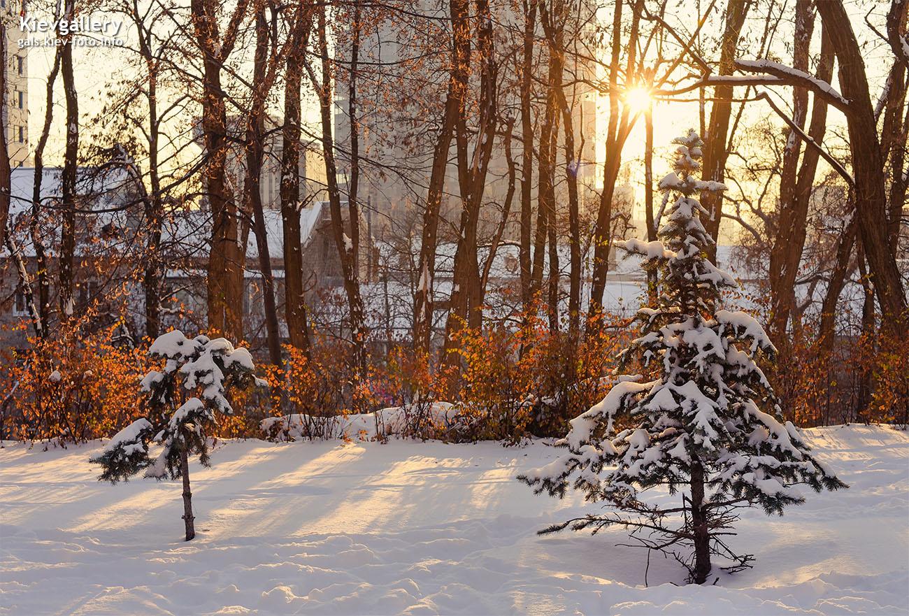 В зимнем сквере Козловского