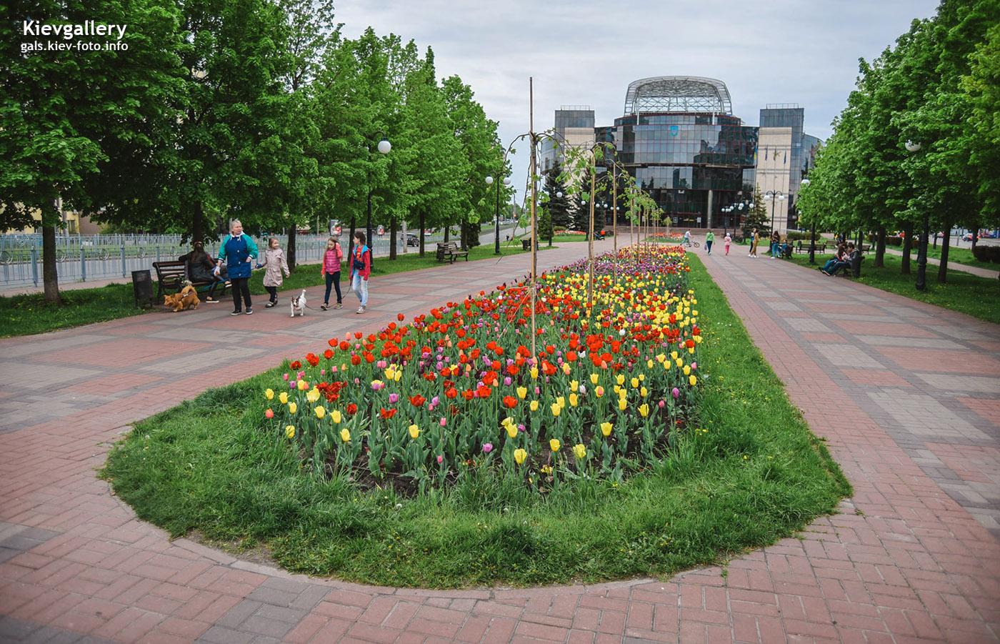 Тюльпаны в сквере перед зданием Соломенской администрации