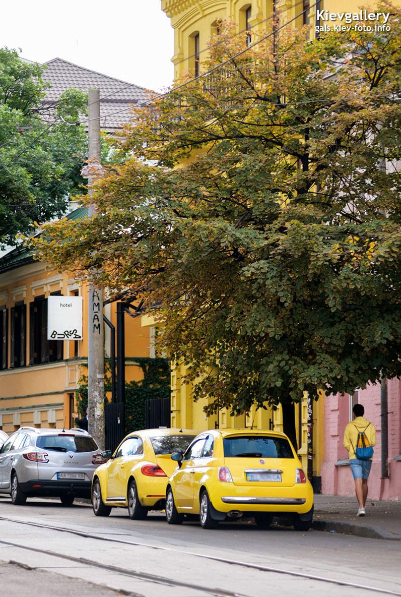 Солнечные цветы улицы Константиновской
