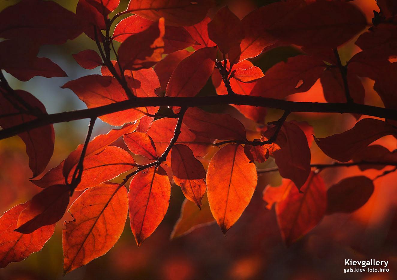 Red october. Красный октябрь